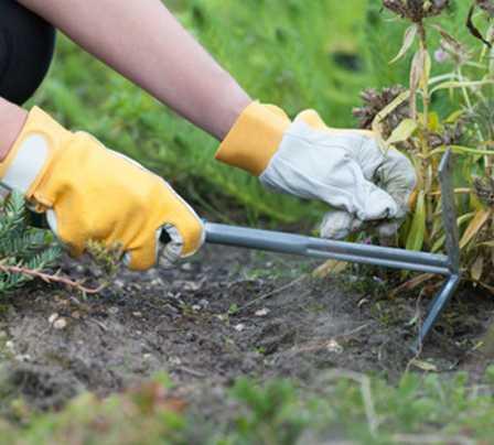 Pest control Sarasota Florida - Pest Guard Termite treatment Sarasota