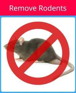 Remove Rodents Red - Pest control Sarasota Florida - Pest Guard Termite treatment Sarasota