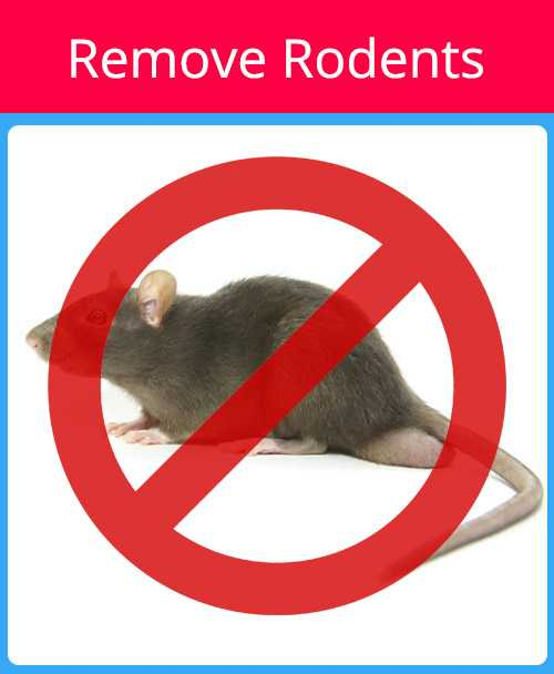 Remove Rodents Red - Pest Control Sarasota Florida - Pest Guard Termite Treatment Sarasota