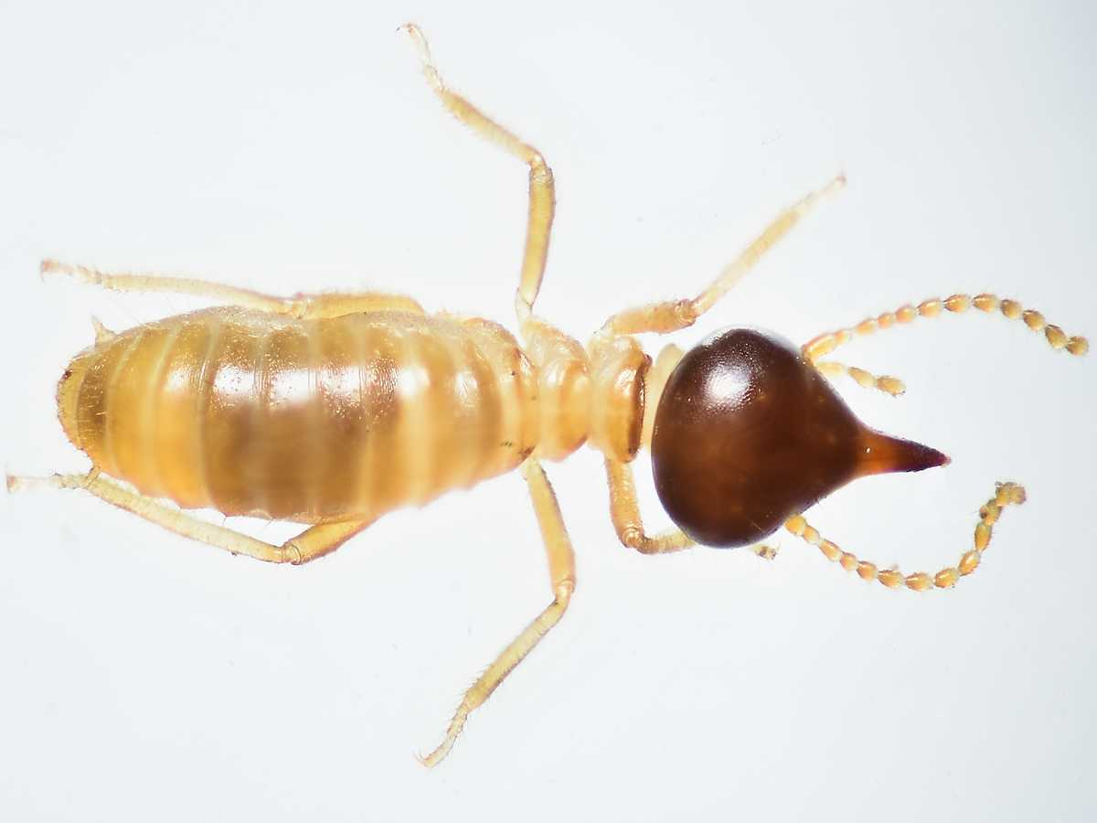 What You Need To Know About Termites