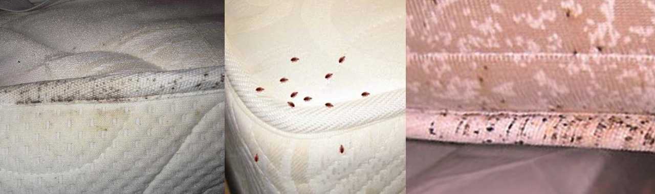 Bed Bugs: Facts & Myths
