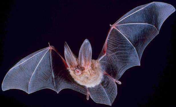 Bat Beware