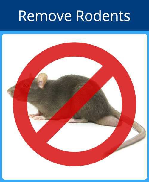 Remove Rodents Blue - Remove Rodents Red - Pest Control Sarasota Florida - Pest Guard Termite Treatment Sarasota