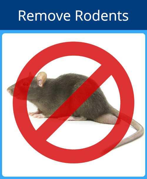 Remove Rodents Blue - Remove Rodents Red - Pest Control Sarasota Florida - Pest Guard Termite Treatment Sarasota
